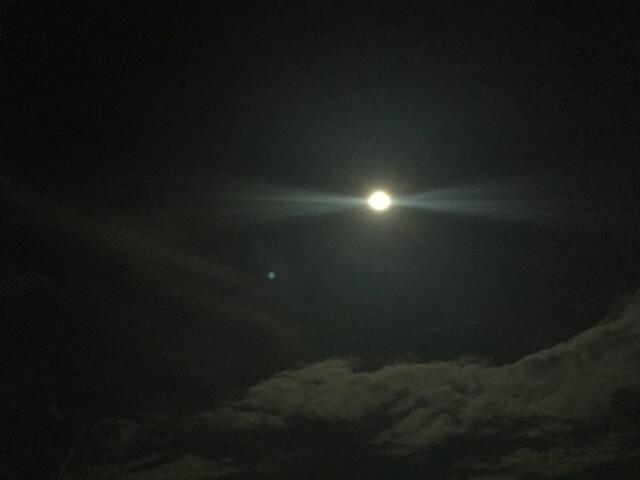 満月の夜…カブトムシ採りとメバリング