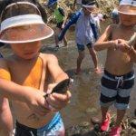 早川港、魚に触れる機会を子供達に。