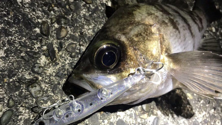 横浜、ワームで釣れるメバルがプラグで釣れない