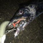 横浜、タチウオ狙いでワインド釣法に苦戦するも念願叶う!