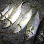 横須賀、サーフアジングで尺アジを釣る!