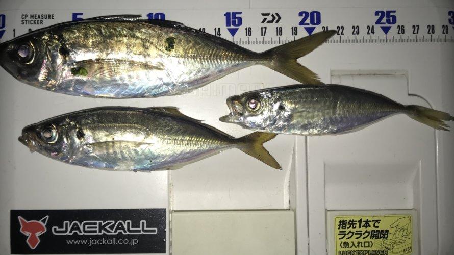 横浜、強風の中でのアジング&自作ルアー大量注文御礼