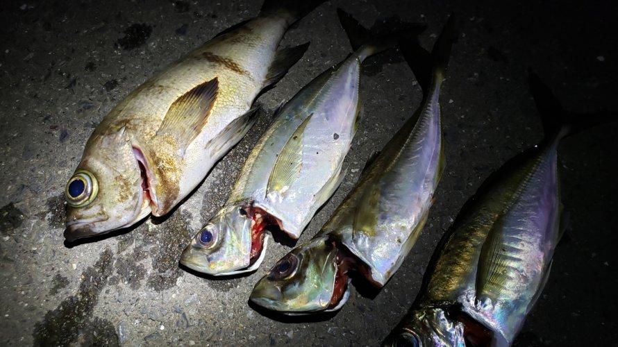 横浜、アジングとメバリング、共に良型が釣れる。